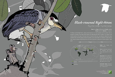 Digital Art - Black-crowned Night-heron Infographic by Marcus England