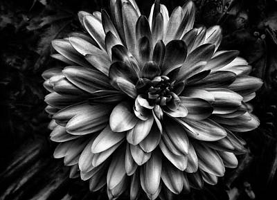 Photograph - Black Dahlia Flower by Phyllis Taylor