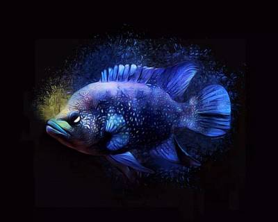 Black Diamond Cichlid Art Print