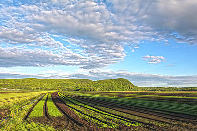 Photograph - Black Dirt Farm Rows by Angelo Marcialis