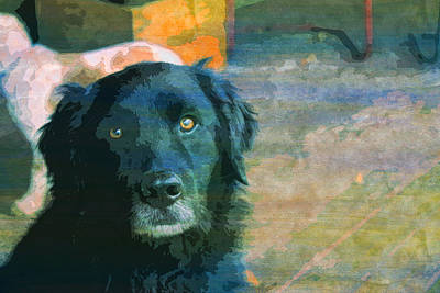 Black Lab Digital Art - Black Dog Dog Black Lab  by PixBreak Art