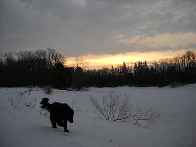 Photograph - Black Dog Exploring Snow At Dawn by Kent Lorentzen