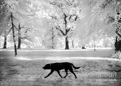Photograph - Black Dog Of Hyde Park by Craig J Satterlee