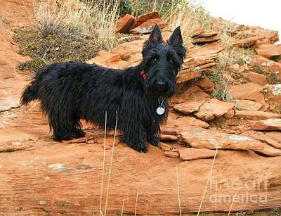 Black Dog Red Rock Art Print
