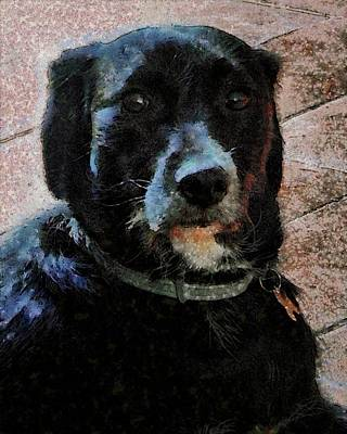Photograph - Black Dog Worry Highlights by Dorothy Berry-Lound