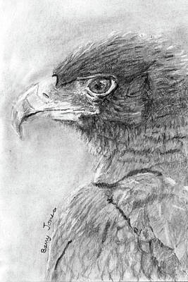 Drawing - Black Eagle by Barry Jones