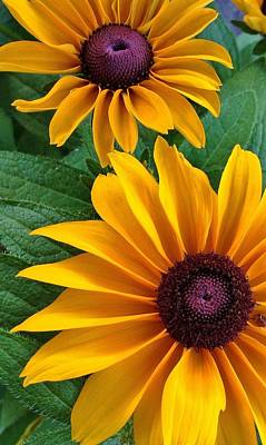 Photograph - Black-eyed Susan 1 by Bruce Bley