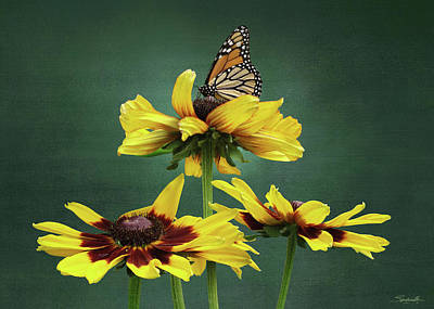 Digital Art - Black-eyed Susan And Monarch  by IM Spadecaller