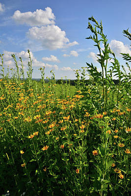Photograph - Black Eyed Susan And Sunflowers by Ray Mathis