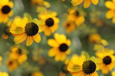 Mixed Media - Black Eyed Susan Floral by Kathleen Sartoris