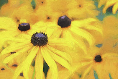 Photograph - Black-eyed Susan Flowers  by Jennie Marie Schell