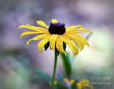 Photograph - Black-eyed Susan by Kerri Farley