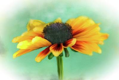 Photograph - Black Eyed Susan by Mary Timman