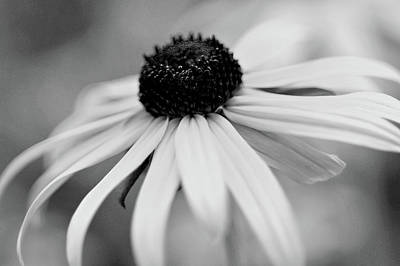 Black Eyed Susan Art Print by Michelle Joseph-Long