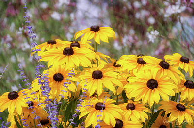 Photograph - Black Eyed Susan by Steph Gabler