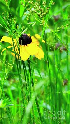 Photograph - Black-eyed Susan Wildflower N1217 by Ella Kaye Dickey