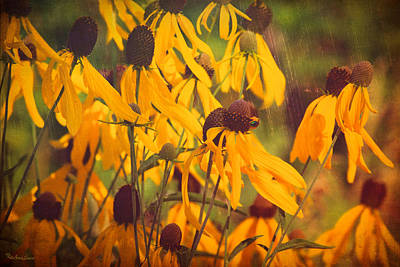 Photograph - Black Eyed Susan Wildflowers by Anna Louise