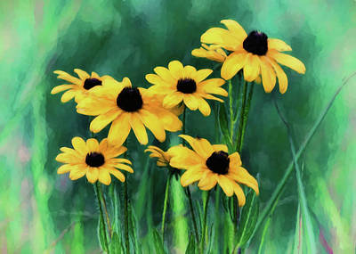 Digital Art - Black-eyed Susan Wildflowers by Ron Grafe