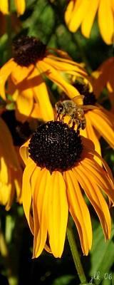 Photograph - Black-eyed Susans 2 by Lori Kingston