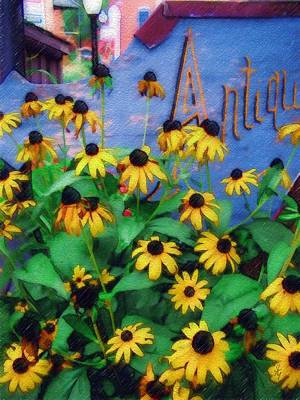 Black-eyed Susans At The Bag Factory Art Print by Sandy MacGowan