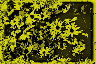 Planting Digital Art - Black Eyed Susan's by Bill Cannon