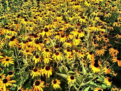 Photograph - Black-eyed Susans by Chris Montcalmo