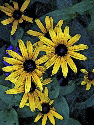 Black-eyed Susans Art Print by Debra Wilkinson