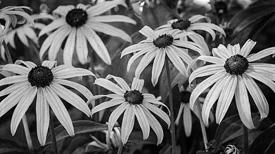 Photograph - Black Eyed Susan's In Black And White by Susan McMenamin