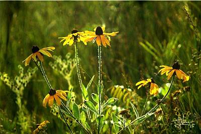 Photograph - Black Eyed Susans In The Wild by Jim Vance