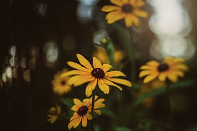 Photograph - Black-eyed Susans by Jessica Nelson