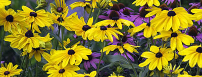 Photograph - Black-eyed Susans by Jim Dollar