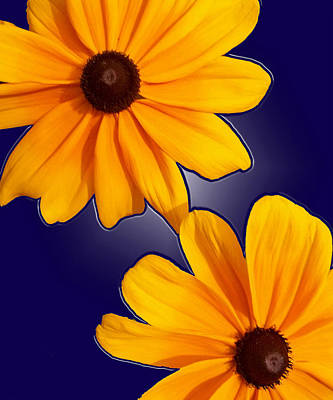 Black-eyed Susans On Blue Art Print
