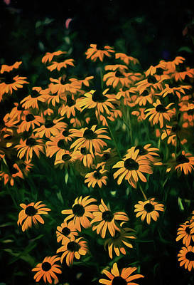 Digital Art - Black-eyed Susans by Richard Farrington