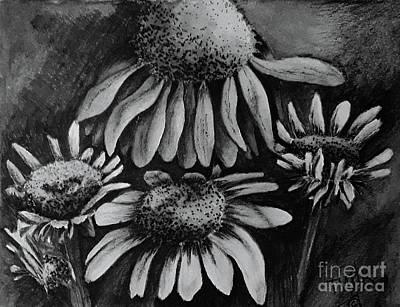 Drawing - Black-eyed Susan's by Terri Mills