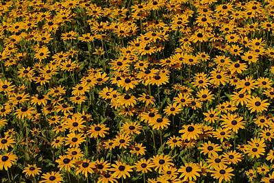 Photograph - Black-eyed Susans by Photography by Tiwago