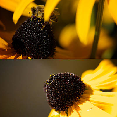 Photograph - Black Eyes And Bees Diptych by Lisa Knechtel