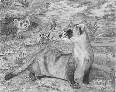 Black-footed Ferret Drawing - Black Footed Ferrets by Cathleen Lengyel