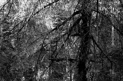 Photograph - Black Forest 2 by Jim Vance