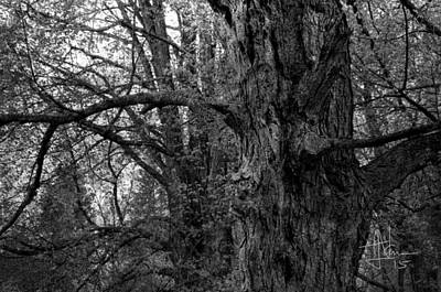 Photograph - Black Forest 3 by Jim Vance