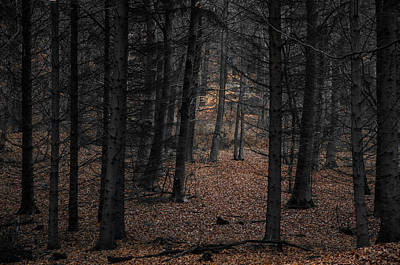Herbstfarben Photograph - Black Forest by Kai Jarchow
