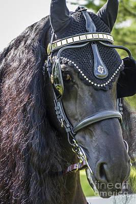 Photograph - Black Friesian Harnessed by Joann Long