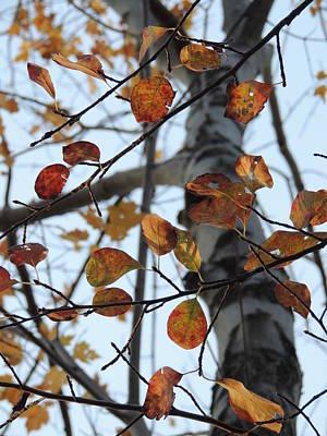 Door Locks And Handles - Black Gum in Autumn by Jamie K Reaser