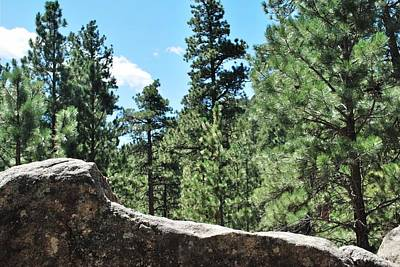 Photograph - Black Hills Forest View Rocky Foreground by Matt Harang