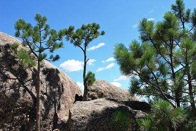 Photograph - Black Hills Rocks And Trees by Matt Harang