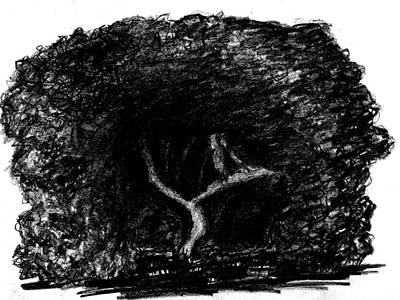 Drawing - Black Hole Tree by Matt Harang