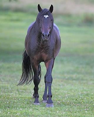 Black Horse Art Print by Glenn Vidal