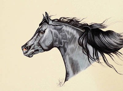 Drawing - Black Horse Head Study 7 by Cheryl Poland