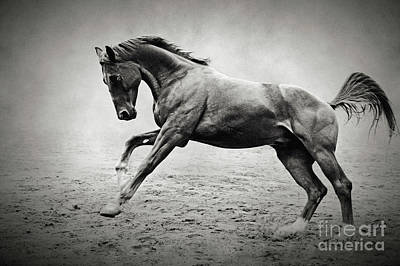 Black Horse In Dust Art Print