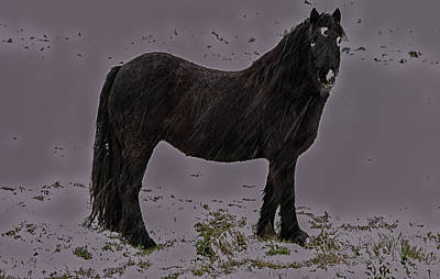 Photograph - Black Horse In The Snow by Scott Lyons