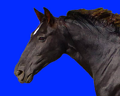 Digital Art - Black Horse Spirit Blue by Jana Russon